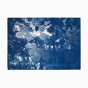 Sunbeam on Forest Leaves, Blue Tones Cyanotype Landscape, Paper, 2021
