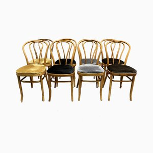 Dining Chairs from Thonet, 1950s, Set of 8
