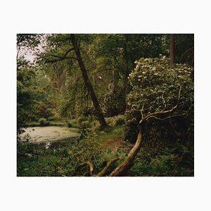 Tung Walsh, Rhododendrum 2, 2020, C-Type Print