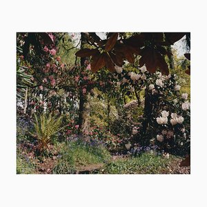 Tung Walsh, Rhododendrons 6, 2020, C-Type Print