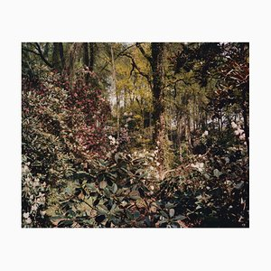 Tung Walsh, Rhododendrons 5, 2020, C-Type Print
