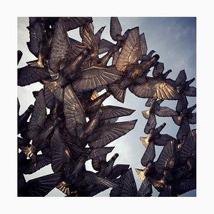 Mihaela Ivanova, Pigeons, 2011