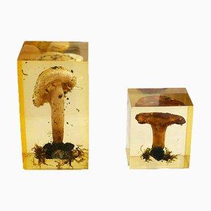 Mushrooms in Resin, 1970s, Set of 2