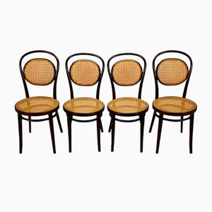Mid-Century Bentwood and Cane Dining Chairs from ZPM Radomsko, 1960s, Set of 4