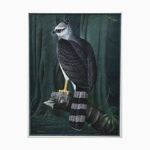 Trevor Boyer, Perched Crested Eagle, Bird of Prey, 1981, Watercolour