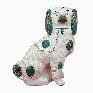 Staffordshire Spaniel Dog
