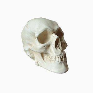 Plaster Vanity Skull