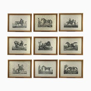 Breeds of Horses Known in Europe by Luigi Giarrè, Florence, 1822, Set of 10