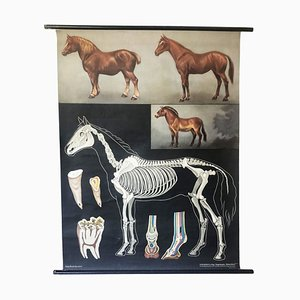 Vintage German Horse School Poster from Jung-Koch-Quentell