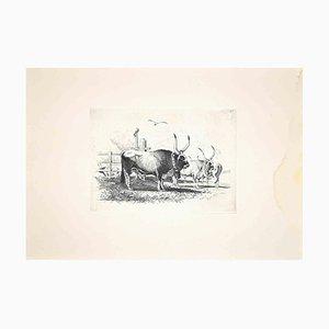 Carlo Coleman, Tori nella campagna romana, Acquaforte originale, 1992