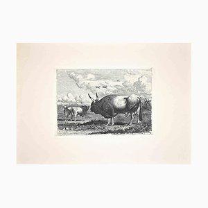 Carlo Coleman, Bulls in the Roman Countryside, Grabado original, 1992