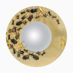 Lo specchio degli insetti