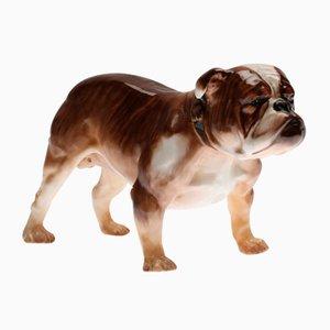 Bulldogge von Royal Doulton