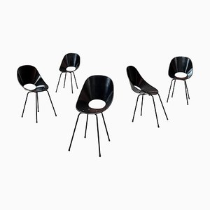 Medea Dining Chairs by Vittorio Nobles for Fratelli Tagliabue, 1955, Set of 5
