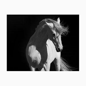 Stallion on Black C-Type Print von 66North