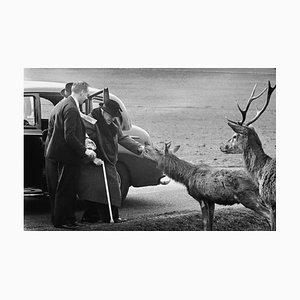 Churchill in Richmond Park Harz Druck von Terry Fincher