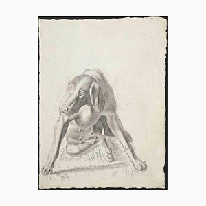 Inconnu, Portrait de Chien, Dessin au Crayon, 1950