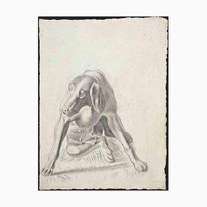 Sconosciuto, Ritratto di cane, Disegno a matita, 1950