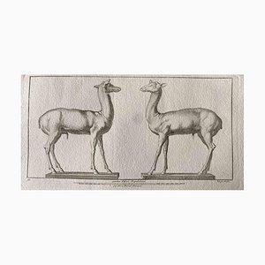 Grabado original, Figuras de animales de la antigua Roma, década de 1750