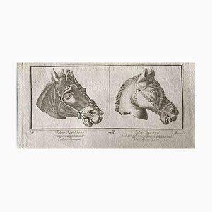 Figuras de animales de la antigua Roma, varios artistas, aguafuerte original, década de 1750