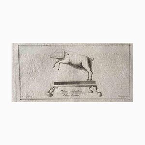 Verschiedene Künstler, Tierfiguren aus dem antiken Rom, Original Radierung, 1750er
