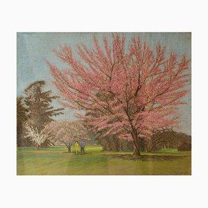 Apple Blossom Tree Park, Mid 20th-Century, Paysage Impressionniste, Huile par Innes, 1950s
