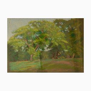 Foresta, fine XX secolo, paesaggio pastello ad olio di William Innes, anni '60