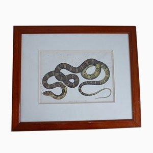 Antiker gerahmter No.2 Snake Print