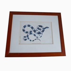 Antiker gerahmter Nr. 1 Snake Print