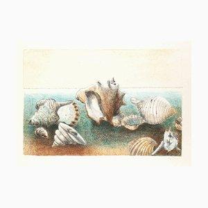 Eva Fischer, conchas marinas, litografía original, finales del siglo XX