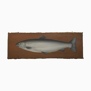 Estudio de un salmón, óleo sobre lienzo