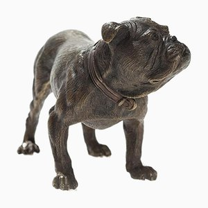Wiener Bronze Englische Bulldogge von Workshop Bermann