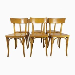 Esszimmerstühle von Thonet, 6er Set