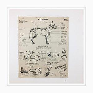 Französische Vintage Anatomie Lehrtafel