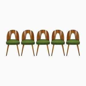 Esszimmerstühle von Antonín Šuman für Tatra, 1960er, 5er Set