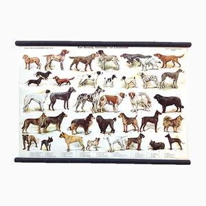 Antikes Schulposter mit verschiedenen Hunderassen