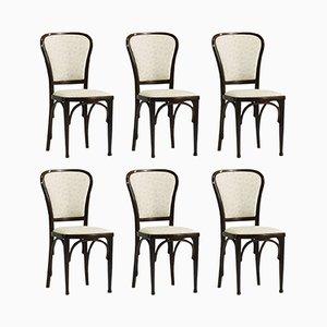 Chaises de Salon par Gustav Siegel pour Thonet, 1910, Set de 6