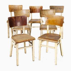 Bugholz Esszimmerstühle von Ton, 1950er, 7er Set