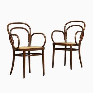 Chaise de Café Viennois Thonet Modèle 214 F