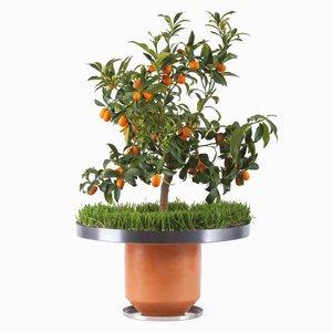 The Phytophiler No.7 (Garden) par Dossofiorito