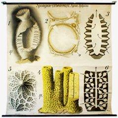 Affiche Spongiae par Paul Pfurtscheller