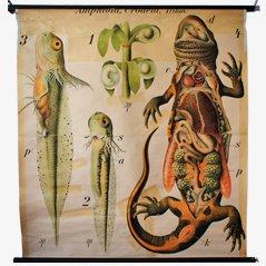 Amphibia' de Paul Pfurtscheller