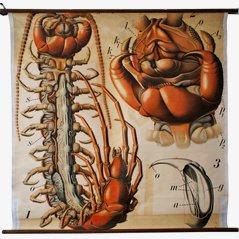 Affiche Centipede par Paul Pfurtscheller