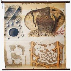 Affiche Sponge par Paul Pfurtscheller