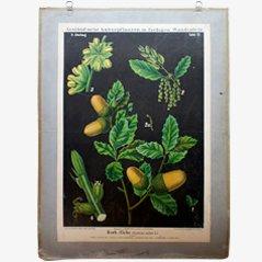 Affiche Murale Cork Oak par Zippel & Bollmann