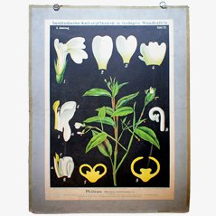 Prayer Plant' Wall Chart by Zippel & Bollmann