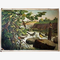 Birds and River' School Wall Chart