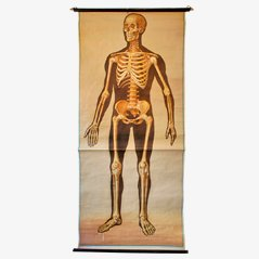 Skeleton Medical Wall Chart