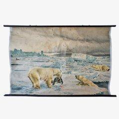 Póster escolar con oso polar de zoológico