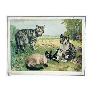 Póster de escuela de gatos de Vil. Tupy, 1923